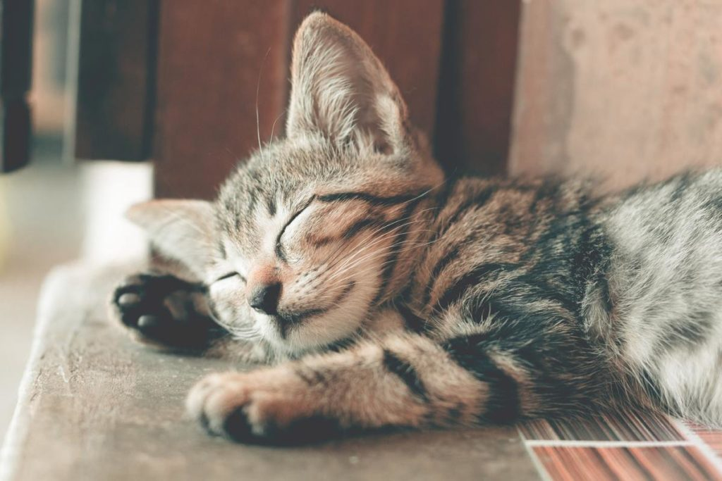 Why Do Cats Sleep So Much? 4