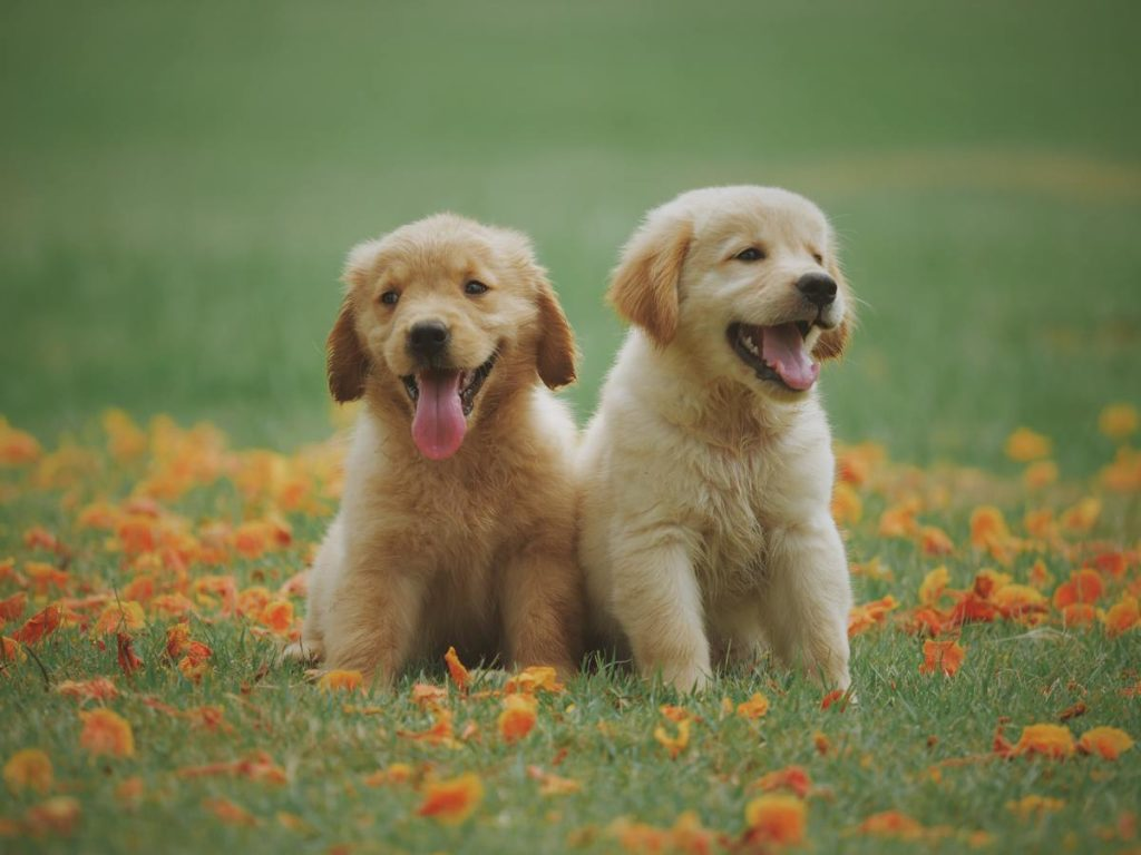 Dogs on grass