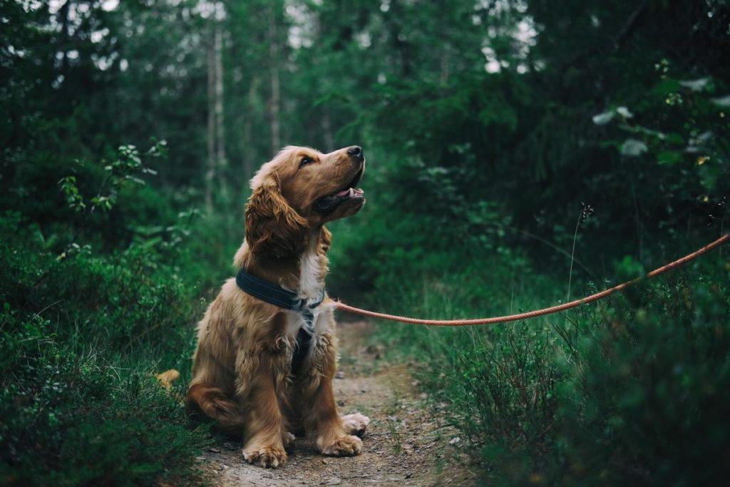 Dog in grassy area
