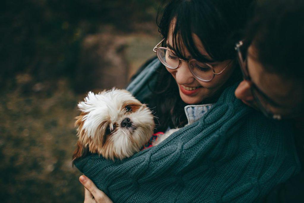 dog in sling