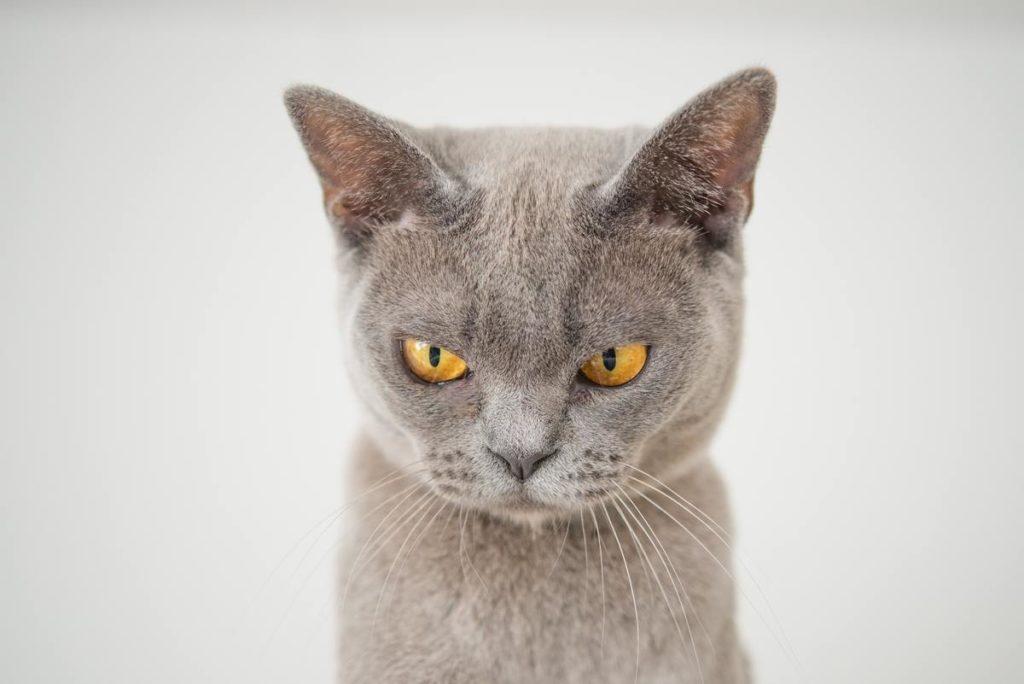 Stop cat pooping in garden