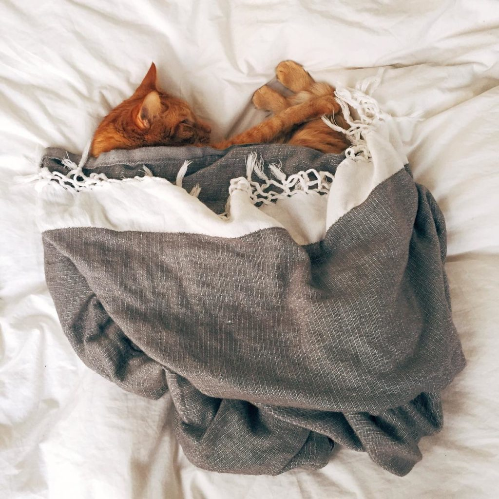Adopt a rescue cat