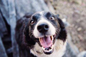 dental health dogs