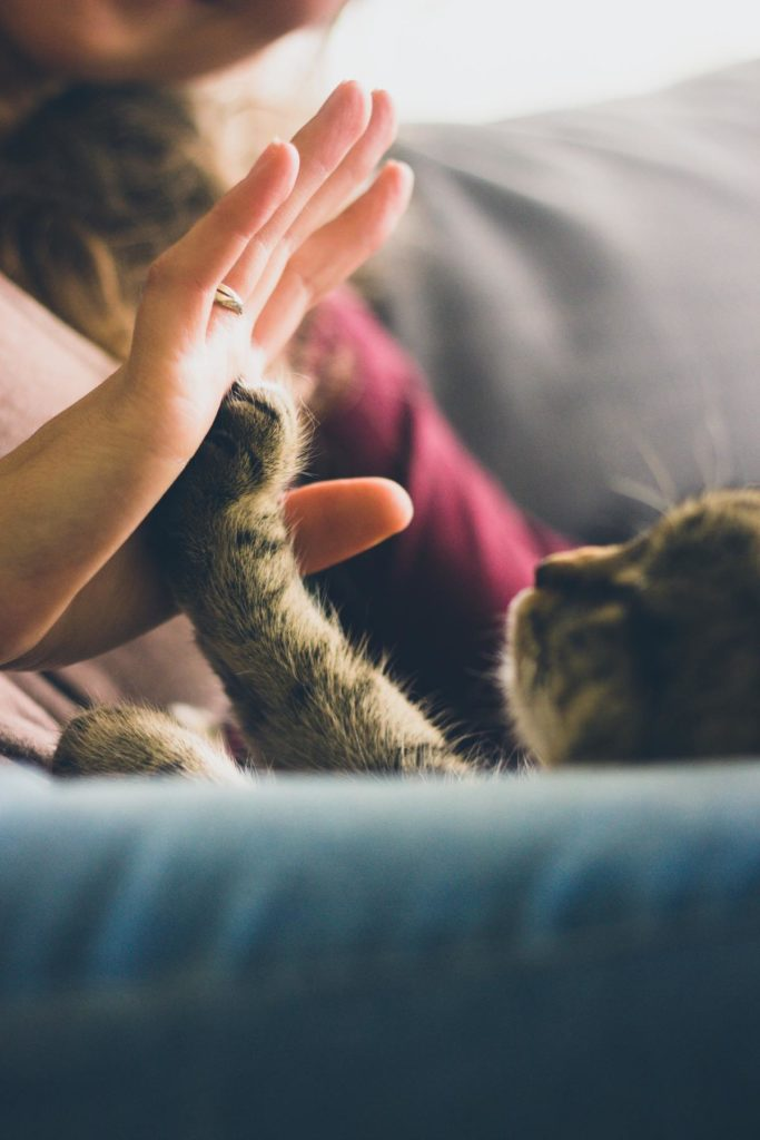 cat high-five