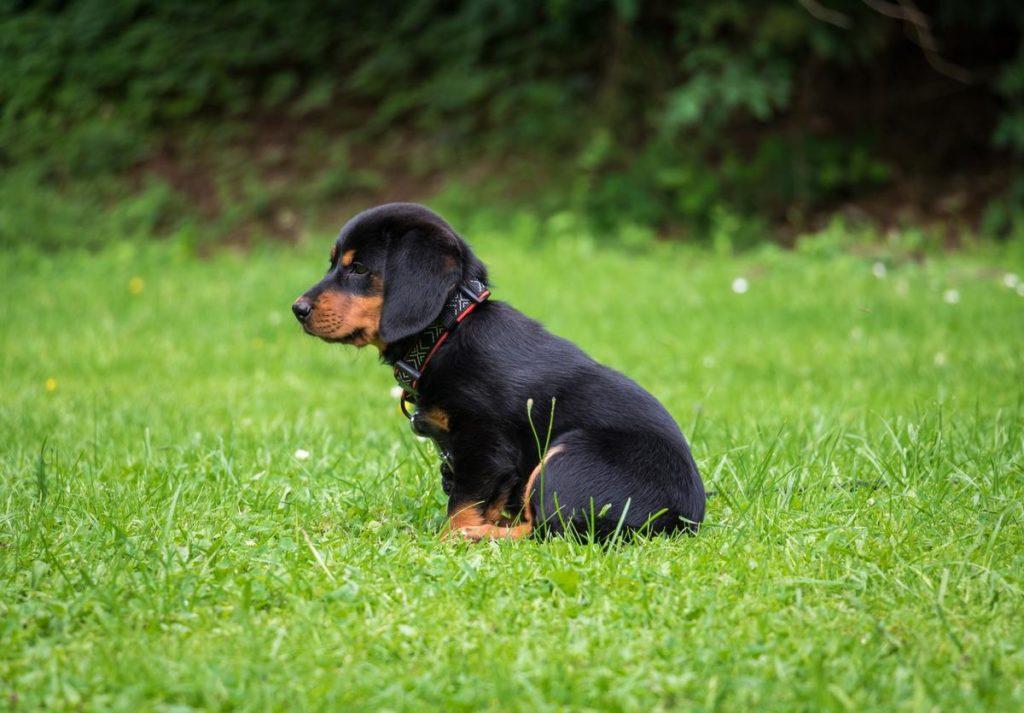 canine dog sitting