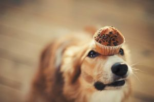 dog and muffin