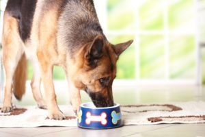 German Shepherd eating from bowl