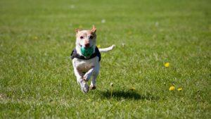 dog fetching ball