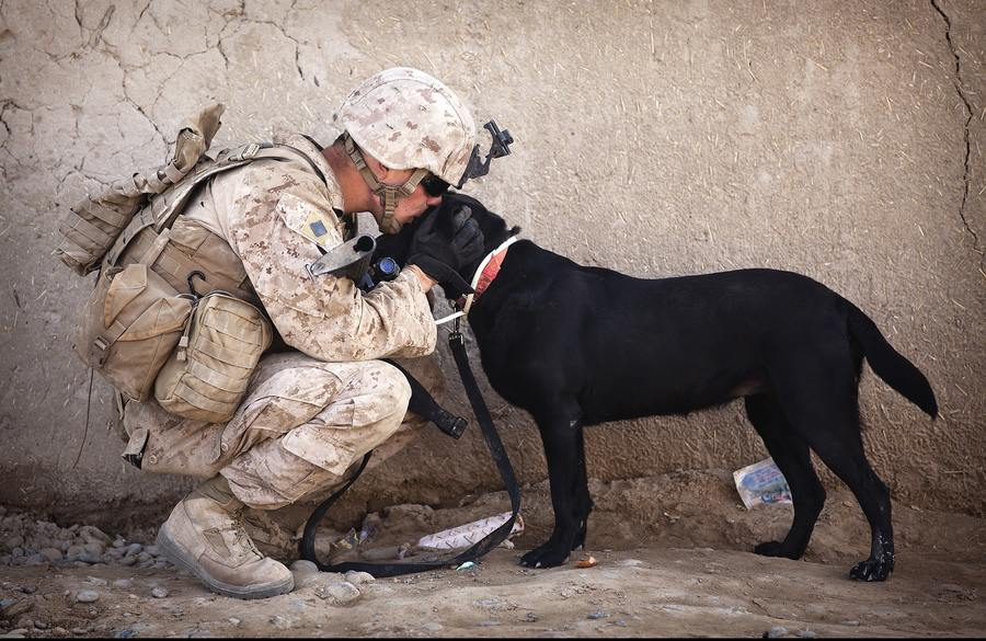 large breed military dog