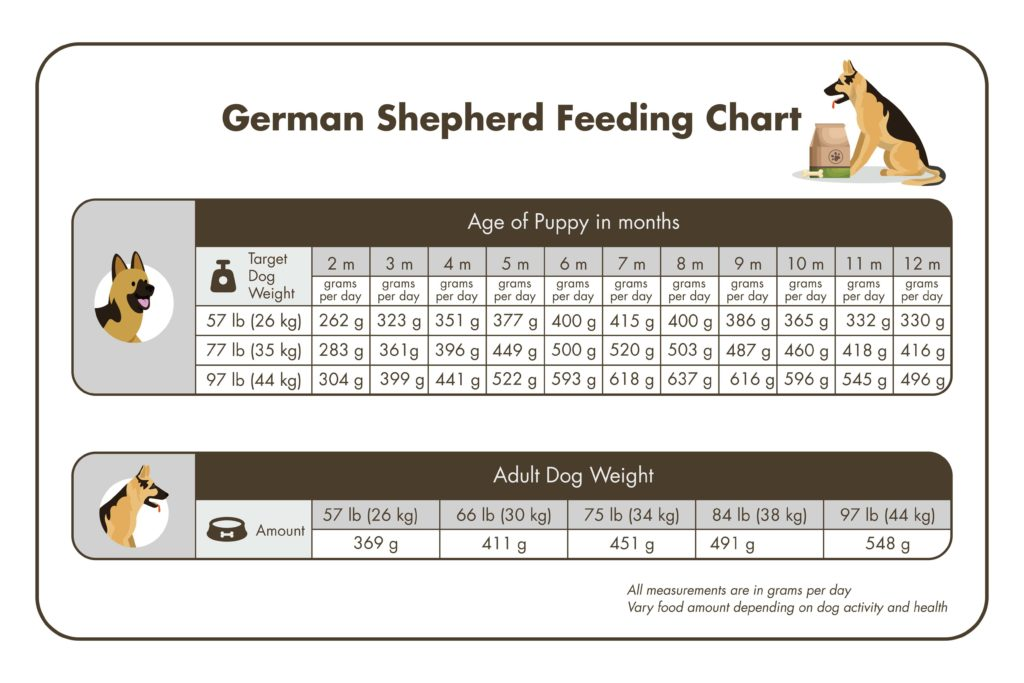 German Shepherd feeding chart for puppy and adults