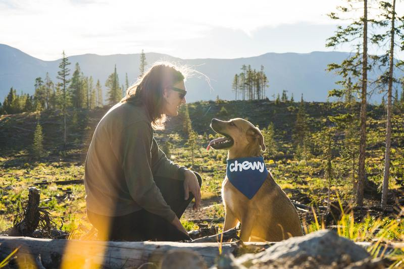 dog with owner in the mountains