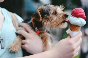 dog licking ice cream