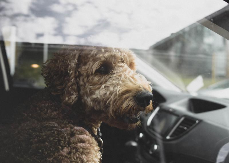 dog in the window car seat
