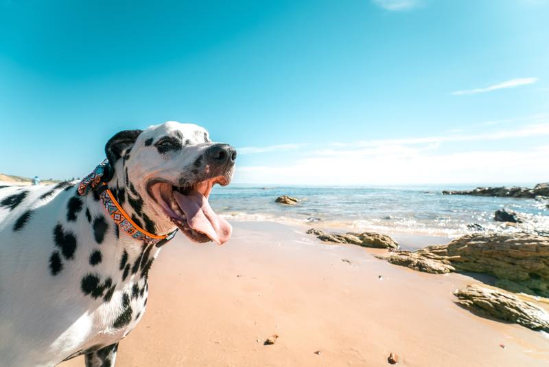 dog in beach