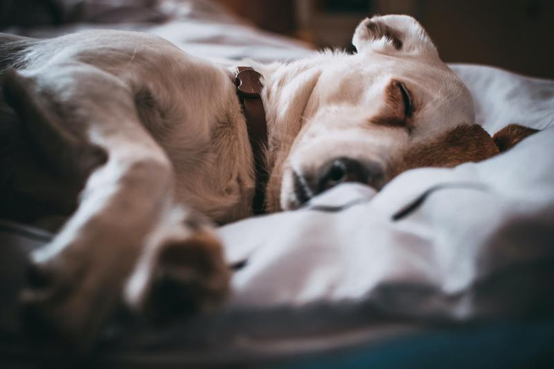 can dogs get acid reflux