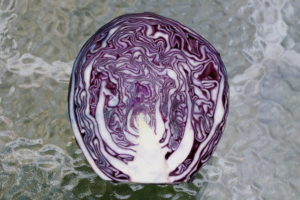 can dogs eat red cabbage