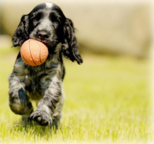 dog holding ball